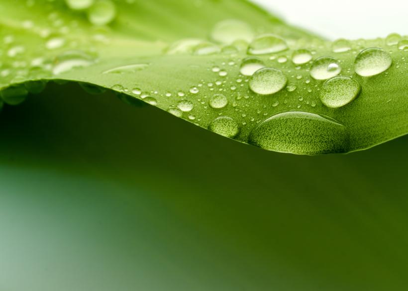 groene-achtergrond1