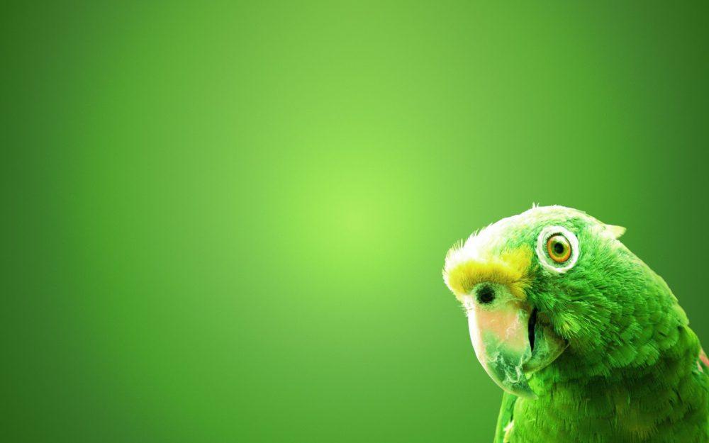 groene-hd-dieren-achtergrond-met-een-groene-papegaai