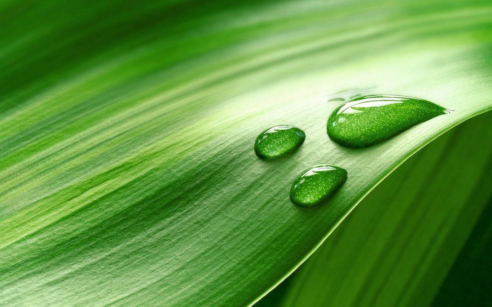 hd-groene-achtergrond-van-een-blad-met-waterdruppels-hd-groene-wallpaper-foto